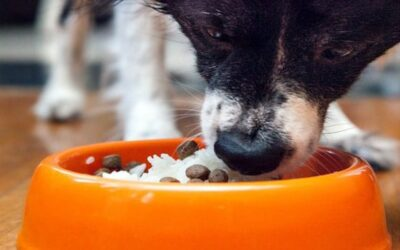 THREE KEY BENEFITS OF INCLUDING RICE IN YOUR DOG'S DIET