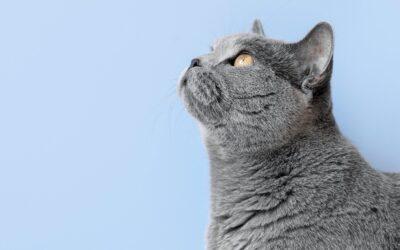 FELINE IMMUNODEFICIENCY VIRUS (FIV), FATAL FOR CATS